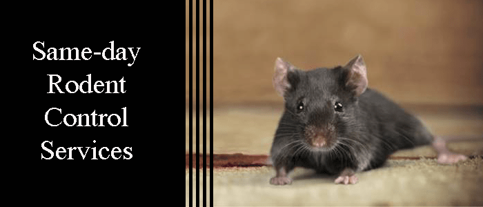 Same Day Rodent Control Services
