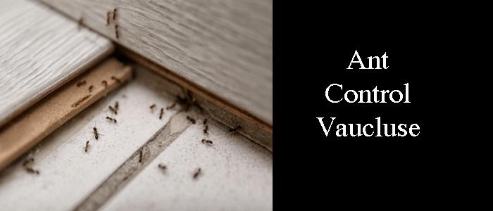 Ant Control Vaucluse